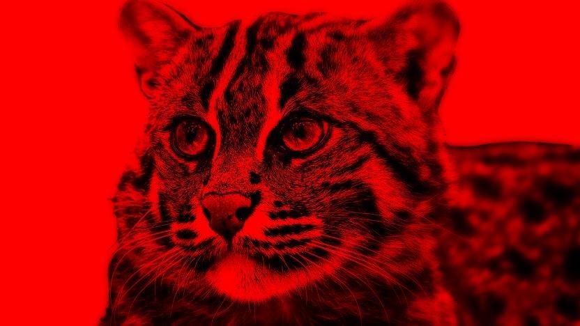 Kucing Hutan Indonesia Yang Terancam Punah Opini Id