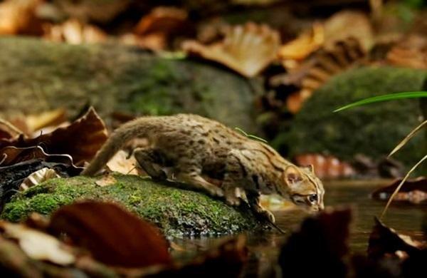 Imut dan Lucu, Ini  Kucing Terkecil di Dunia